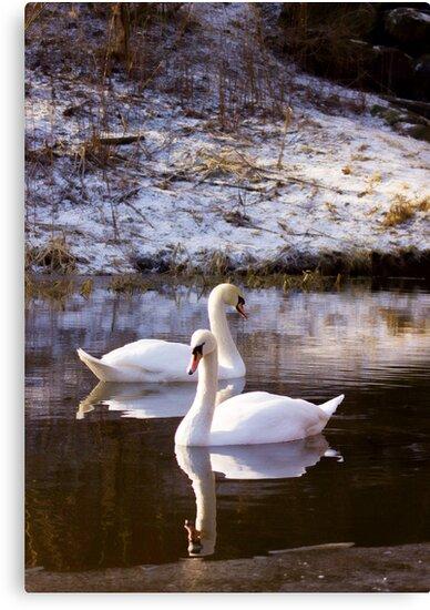 Swan Lake by Lynne Morris