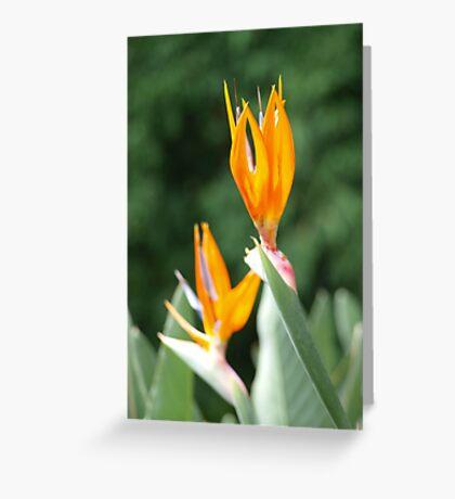 Strelitzia Flower  #2 Portrait style Greeting Card