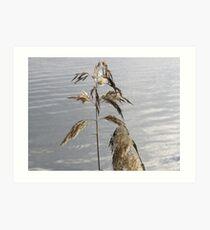Summertime Grass in seed  Art Print