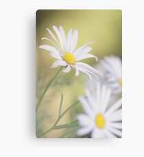 Softly Softly - white daisies Canvas Print
