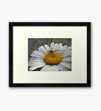 Those Are Some Crazy Legs!! Framed Print