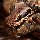 Baby Cottonmouth by MyFrogCroaked