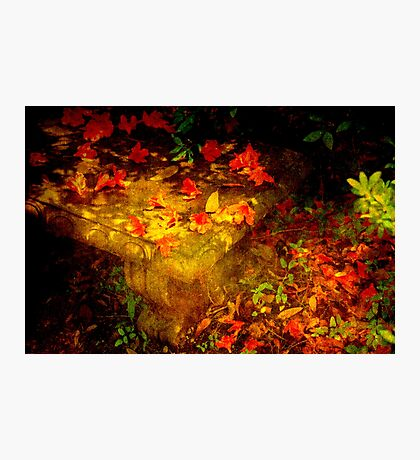 Spring or Autumn? Photographic Print