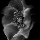 Morning Dew Inspire by Marilyn Schmidlin