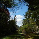 View at Dawyck Gardens, late May by Babz Runcie