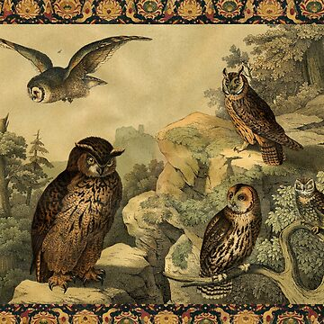OWLS IN WILD NATURE Antique Animal Drawings by BulganLumini