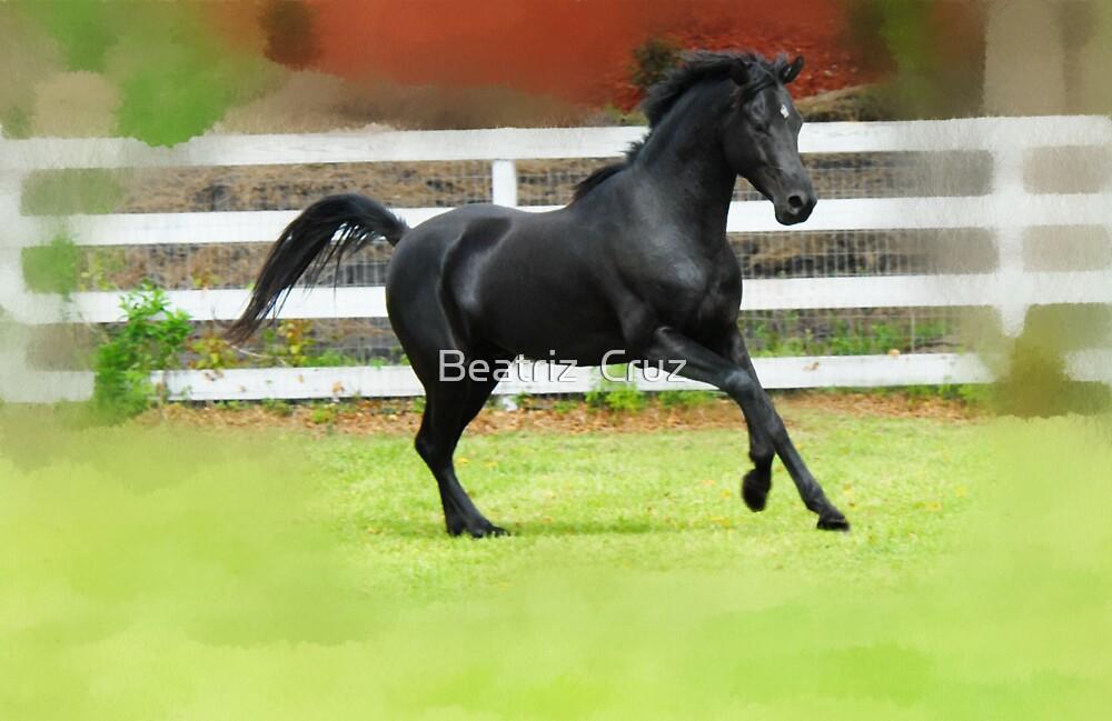 Black Arabian Stallion  by Beatriz  Cruz