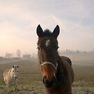 """""""Guten Morgen"""" Amish Horses. von Billlee"""