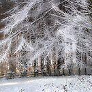 Snow Bride by Ann Garrett