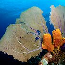 Yellow Sponge & Fan coral symmetry by muzy
