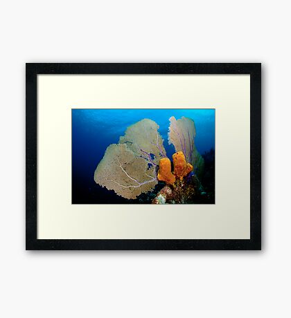 Yellow Sponge & Fan coral symmetry Framed Print