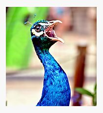 Peacock, hear me roar! Photographic Print