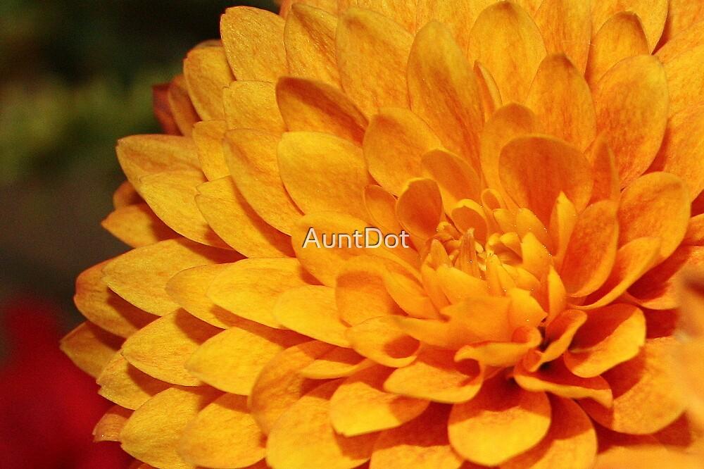 Simply Orange by AuntDot