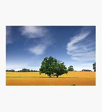 Scenic Landscape In Wheat Fields Photographic Print