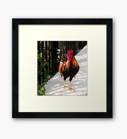 The Red Rooster in Key West, FL Framed Print