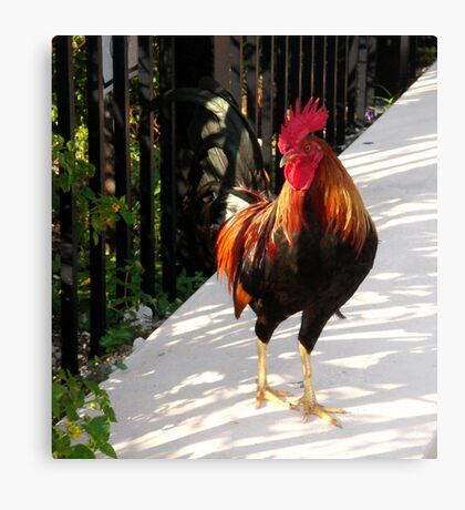 The Red Rooster in Key West, FL Canvas Print