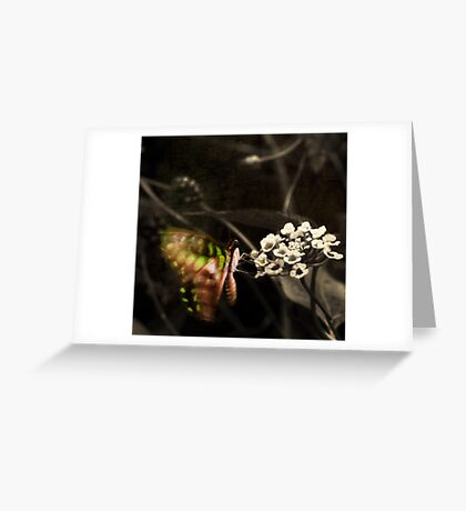 Flowers and butterflies drift in colour, illuminating spring. Greeting Card