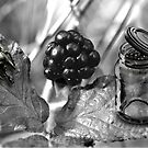 Beetle Black Berry Jar by GolemAura