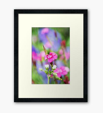 Blanche Rose Petite Framed Print