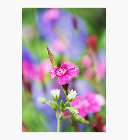 Blanche Rose Petite Photographic Print