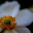 White D by Marilyn Schmidlin