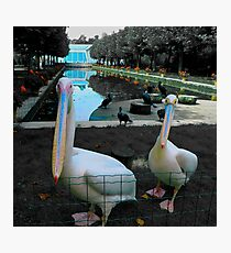 Berlin Zoo Photographic Print