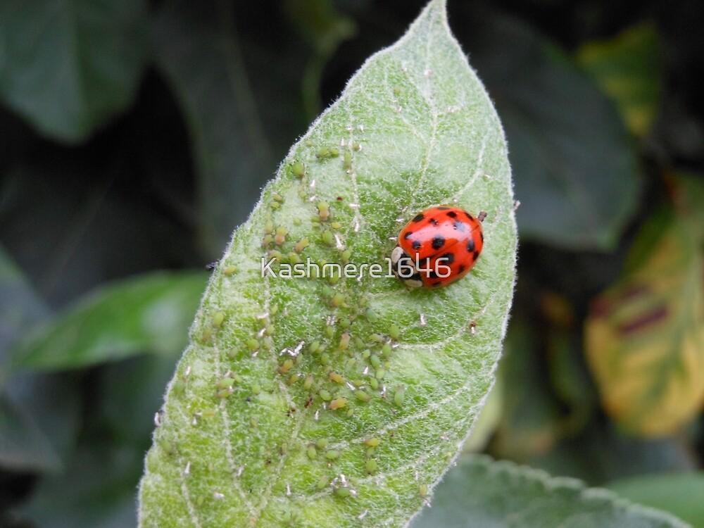 Ladybug by Kashmere1646