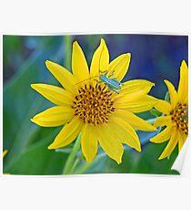 """Grasshopper on Sunflower """"BaskinGrass"""" Poster"""