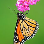 The Flower And The Butterfly by CBoyle