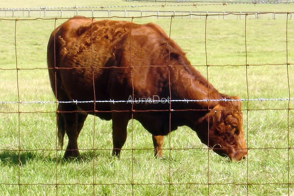 Big Red -- Grazing Cattle by AuntDot