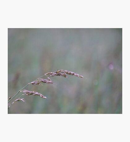 Summer Grass 7 Photographic Print