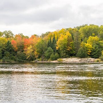 Silver and Gold Currents - Mississagi River Autumn  by GeorgiaM