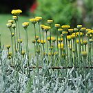 Pincushions in a row by Catherine Davis