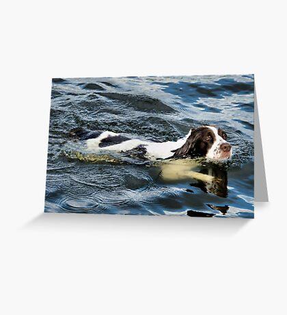 Swimming Springer Greeting Card