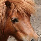 Tia - Miniature Pony by Jenny Brice