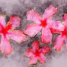 Four Pink Hibiscus Flowers Watercolor Photograph by rhamm