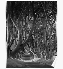 Dark Hedges, Co. Antrim, N. Ireland Poster