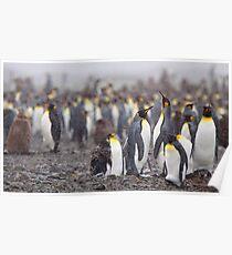 King Penguin Gathering Poster