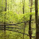 Beaver Dam by elasita