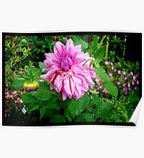 Naik Michel Photography - Hortensia House Garden Pink Flower 001 Poster