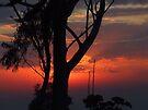 """""""Pre-Dawn"""" by debsphotos"""