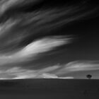 The Clouds and the little Tree ... Black Forest by Angelika  Vogel
