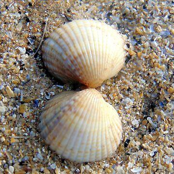 shells by KathleenDawson