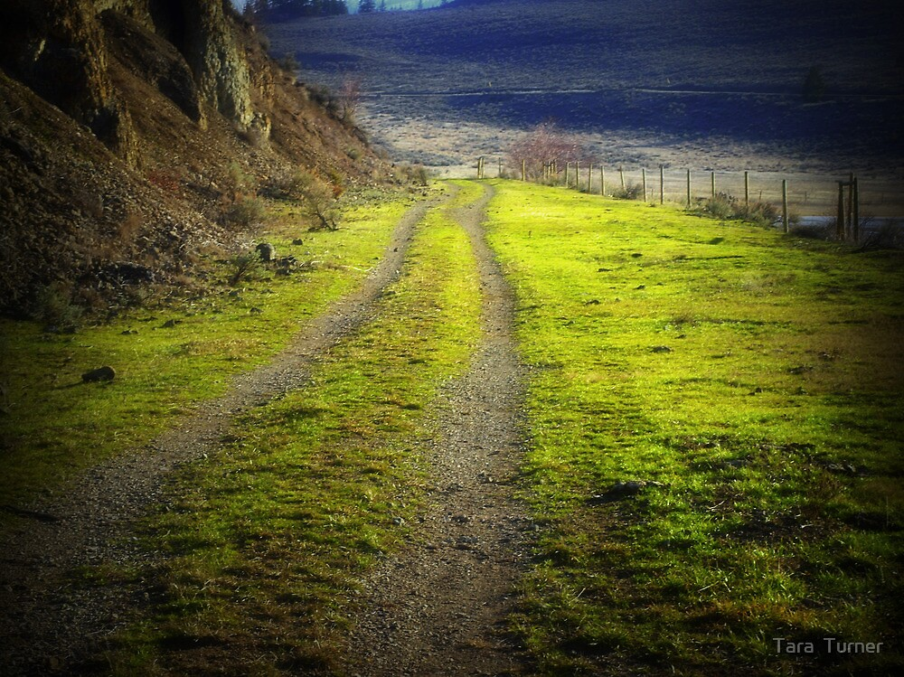 The Road to Nowhere by Tara  Turner