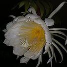 Night flower by agnessa38