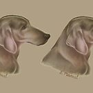 Woody the Weimaraner   by NTBrandy7