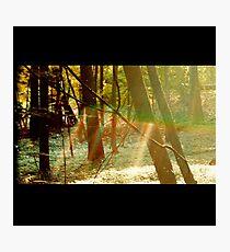 Camp Photographic Print