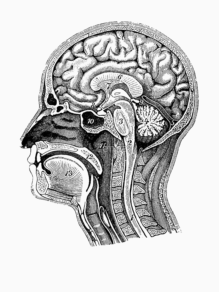Anatomical Brain Drawing\