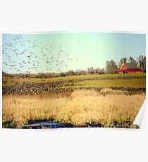 Canadian Geese Migration Poster