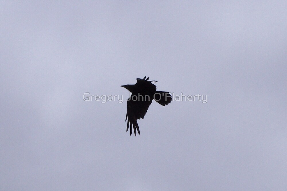 Great Raven by Gregory John O'Flaherty